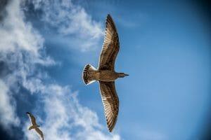 sea-gull-765490_1280